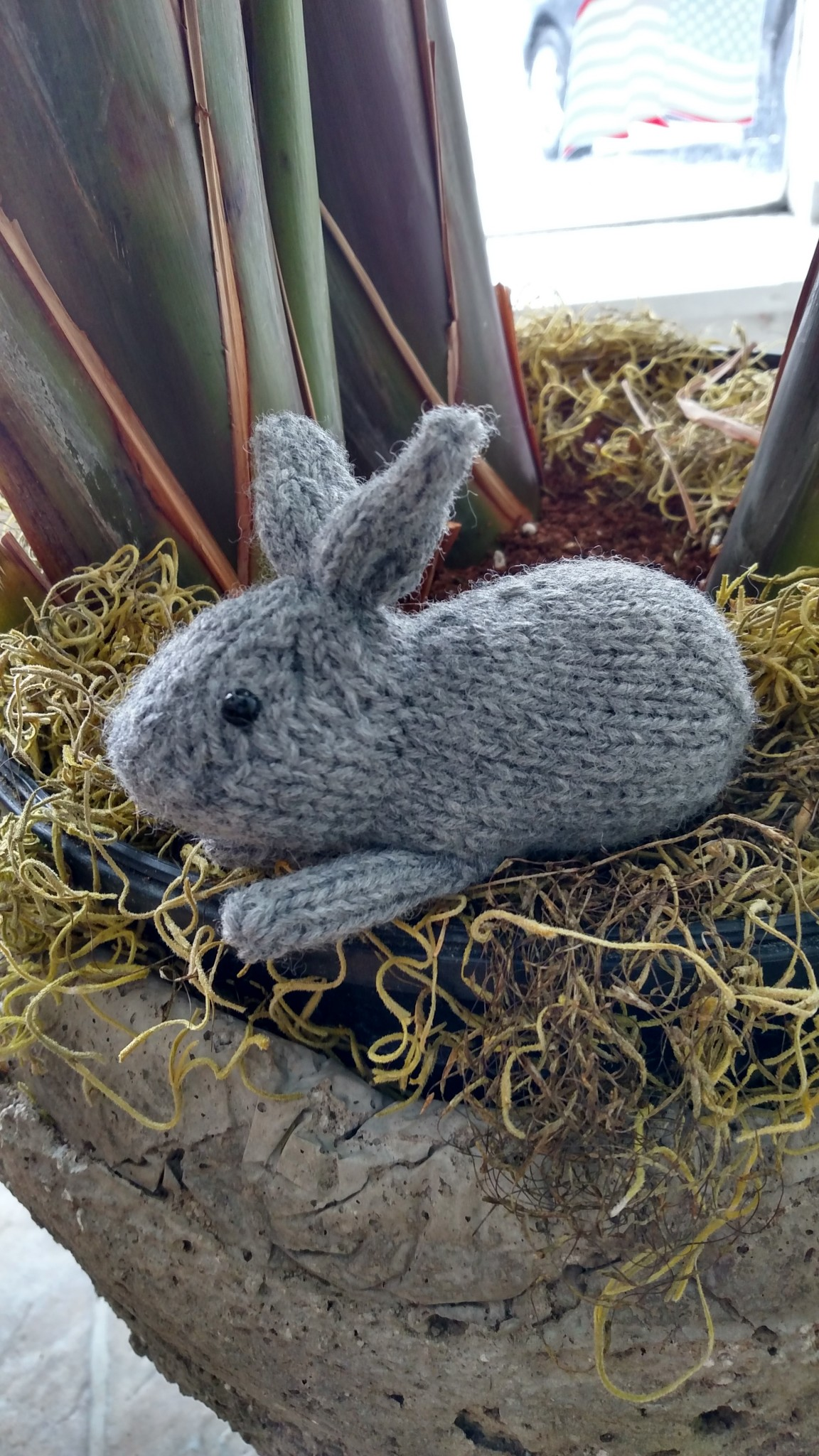Henry's Bunny